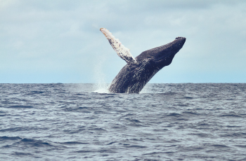 Avistamiento-de-ballenas-